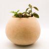 wooden-plant-holder-Zara