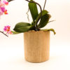 plant holder wooden emma
